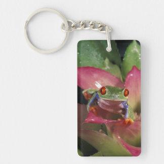 Red-eyed tree frog Agalychnis callidryas) Keychain