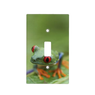 Red-eyed tree frog (Agalychnis callidryas) Light Switch Cover