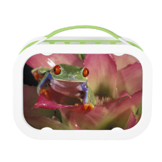 Red-eyed tree frog Agalychnis callidryas) Lunch Box