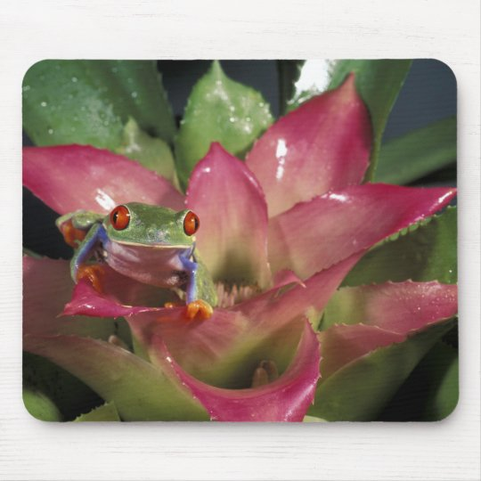 Red-eyed tree frog Agalychnis callidryas) Mouse Pad