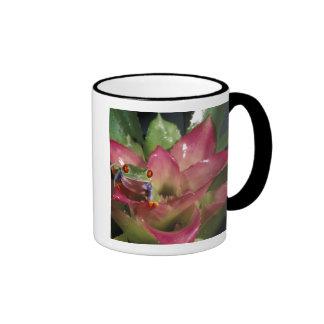 Red-eyed tree frog Agalychnis callidryas) Mug