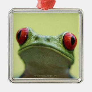 Red-eyed tree frog (Agalychnis callidryas) Christmas Ornaments