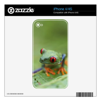 Red-eyed tree frog (Agalychnis callidryas) Skin For The iPhone 4S