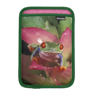 Red-eyed tree frog Agalychnis callidryas) Sleeve For iPad Mini
