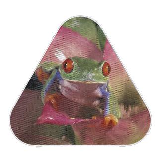 Red-eyed tree frog Agalychnis callidryas) Speaker