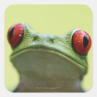 Red-eyed tree frog (Agalychnis callidryas) Square Sticker