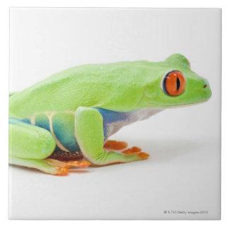 Red-Eyed Tree Frog (Agalychnis Callidryas) Tile