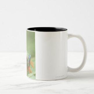 Red-eyed tree frog (Agalychnis callidryas) Two-Tone Coffee Mug