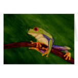 Red Eyed Tree Frog Blank Greeting Card