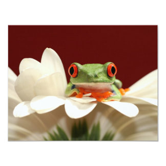red eyed tree frog card