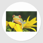 red eyed tree frog classic round sticker