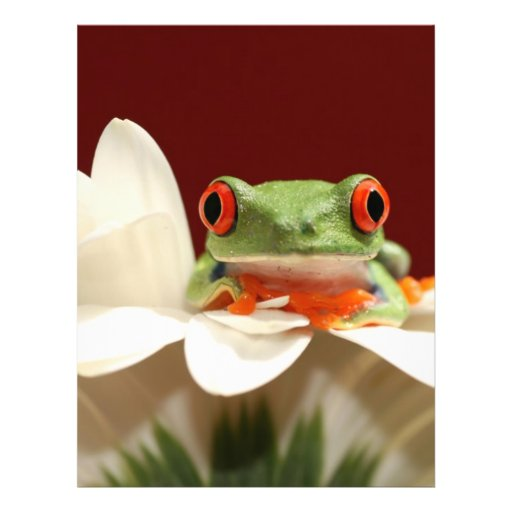 red eyed tree frog custom flyer
