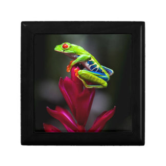 Red-eyed Tree Frog Gift Box