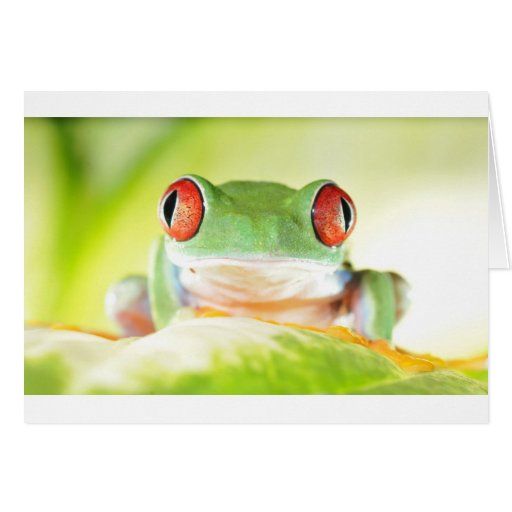 red eyed tree frog greeting cards