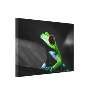 Red Eyed Tree Frog III Gallery Wrapped Canvas
