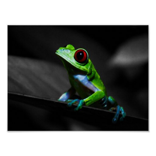 Red Eyed Tree Frog III Poster