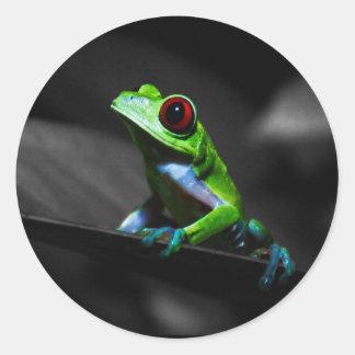 Red Eyed Tree Frog III Sticker