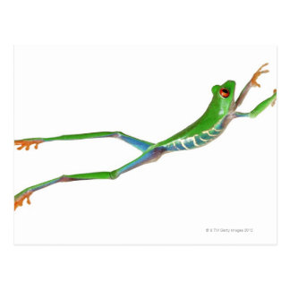Red eyed tree frog jumping postcard