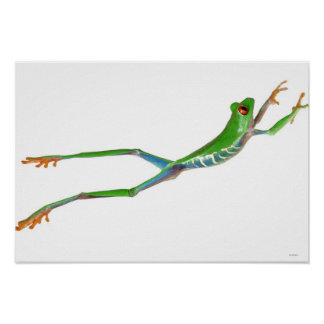 Red eyed tree frog jumping print
