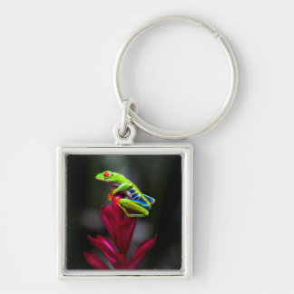 Red-eyed Tree Frog Keychain