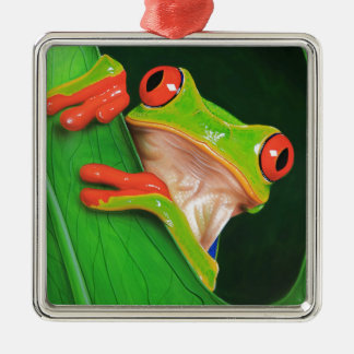 Red Eyed Tree Frog Metal Ornament