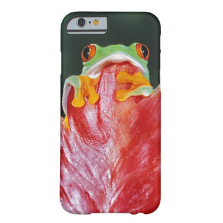 Red-Eyed Tree Frog on Leaf Barely There iPhone 6 Case