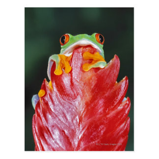 Red-Eyed Tree Frog on Leaf Postcard