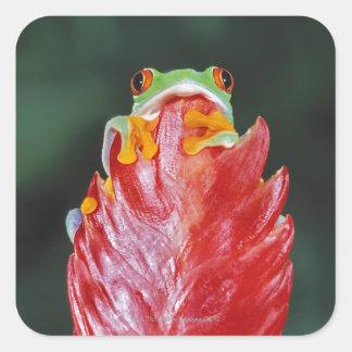 Red-Eyed Tree Frog on Leaf Square Sticker