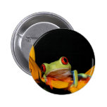 red eyed tree frog pinback button