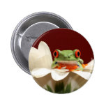 red eyed tree frog pinback buttons