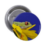 red eyed tree frog pins