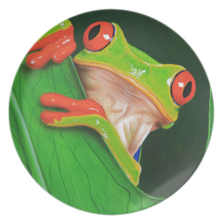 Red Eyed Tree Frog Plate