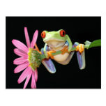 red eyed tree frog post cards
