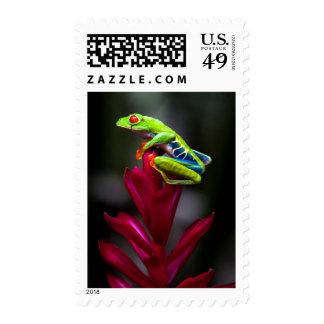 Red-eyed Tree Frog Postage Stamp