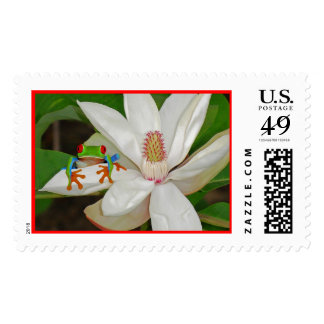 Red Eyed Tree Frog Postage