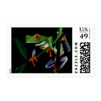 Red eyed tree frog postage stamp