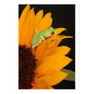 red eyed tree frog postcard