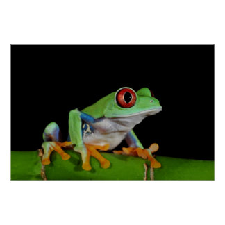 red eyed tree frog posters
