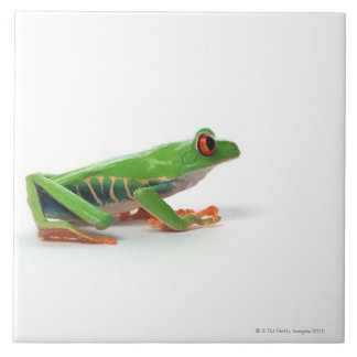 Red eyed tree frog tile