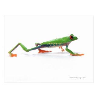 Red eyed tree frog walking postcard