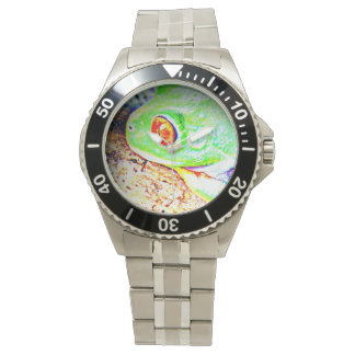 Red Eyed Tree Frog Watch