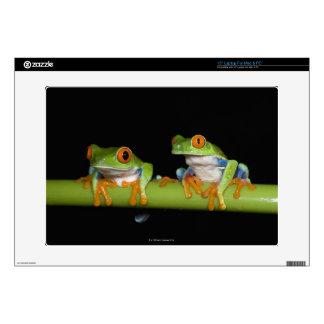 "Red-eyed Tree Frogs (Agalychnis callidryas) 15"" Laptop Decal"