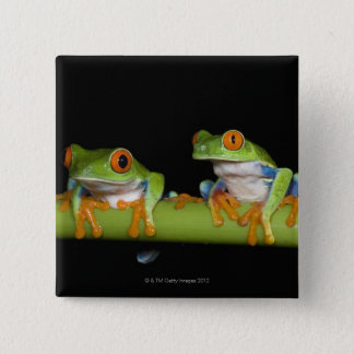 Red-eyed Tree Frogs (Agalychnis callidryas) Button