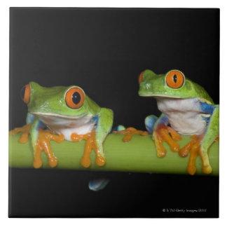 Red-eyed Tree Frogs (Agalychnis callidryas) Ceramic Tile