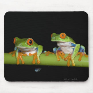 Red-eyed Tree Frogs (Agalychnis callidryas) Mouse Pad
