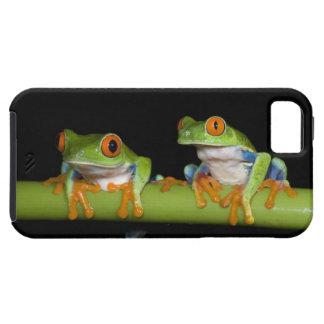 Red-eyed Tree Frogs (Agalychnis callidryas) on iPhone SE/5/5s Case