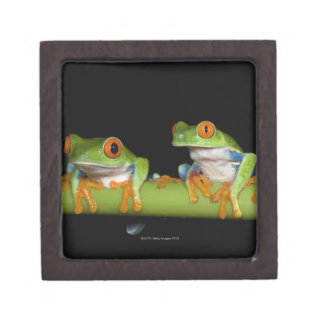 Red-eyed Tree Frogs (Agalychnis callidryas) on Jewelry Box
