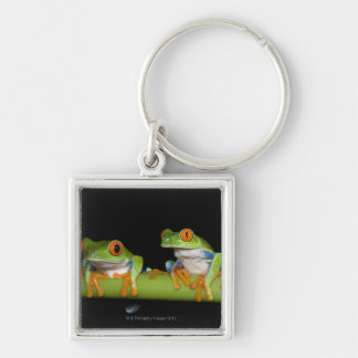 Red-eyed Tree Frogs (Agalychnis callidryas) on Keychain