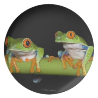 Red-eyed Tree Frogs (Agalychnis callidryas) on Party Plate