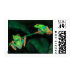 Red-Eyed Tree Frogs Stamp
